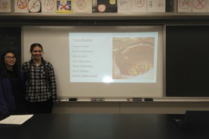 parasite presentation 1