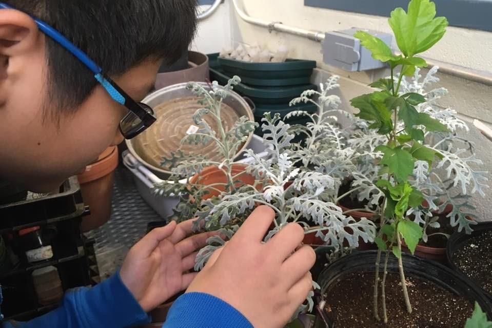 Gr 9 gardening